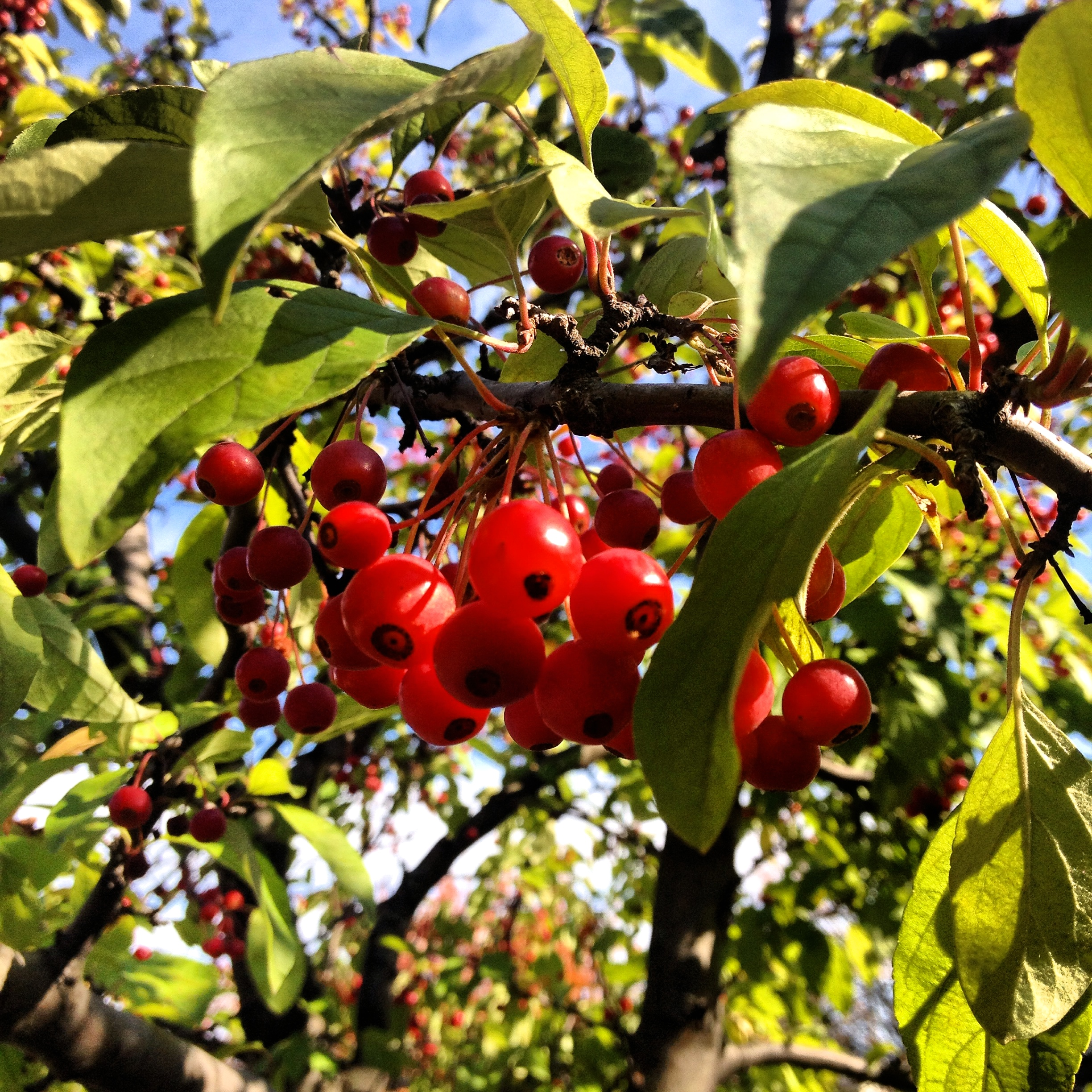 Berries in Riverdale by Ms. Cruz