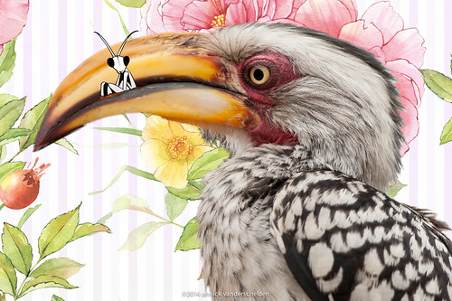 Southern yellow-billed hornbill composite.jpg