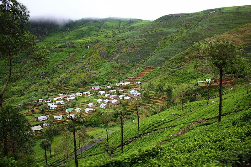Workers' living quarter - Dambatenne Tea Plantation