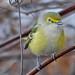 larry522 has added a photo to the pool:11/23/14Burlington, VTebird checklist: ebird.org/ebird/vt/view/checklist?subID=S20646389