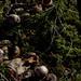 moss, Shenandoah National Park, jdy326 XX201211213482.jpg