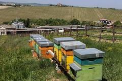 San Patrignano. Apicoltura. Arnie, produzione miele. Panoramica.