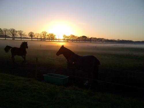 Ondergaande zon en paarden in op komende nevel over de landerijen - Andries Scholing, Alteveer
