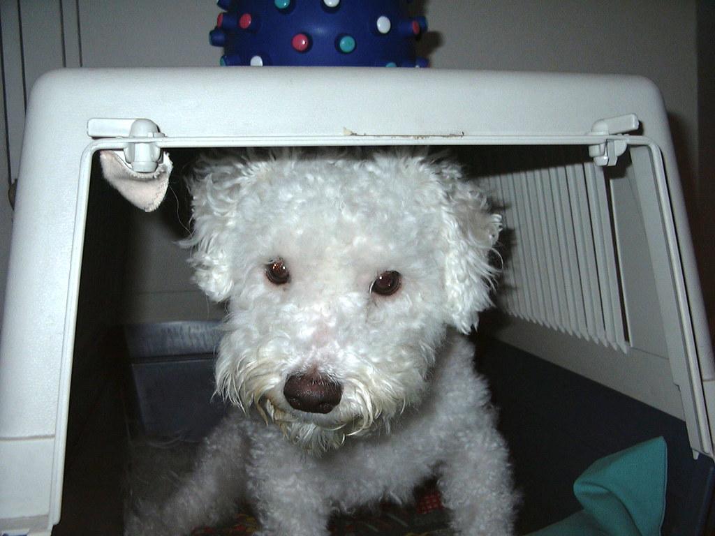 Romeo the puppy