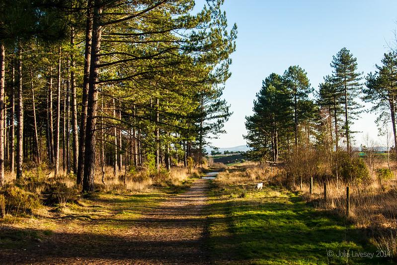 Winter sunshine in Wareham Forest