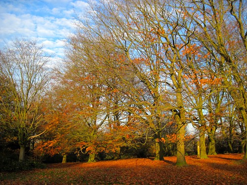 Another Autumn Walk in the Heath