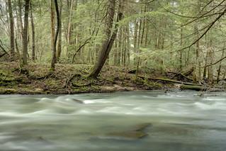 Glade Creek, Bledsoe SF, Bledsoe County, Tennessee 5