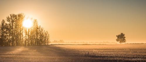 winter canada sunrise hoarfrost alberta namao