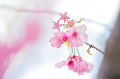 japan 日本 宮城県 shiroyamapark tōdadistrict flickrhongkong 遠田郡 wakuyatown 涌谷城跡 涌谷町城山公園 flickrhkma