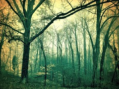 Late Afternoon Woods