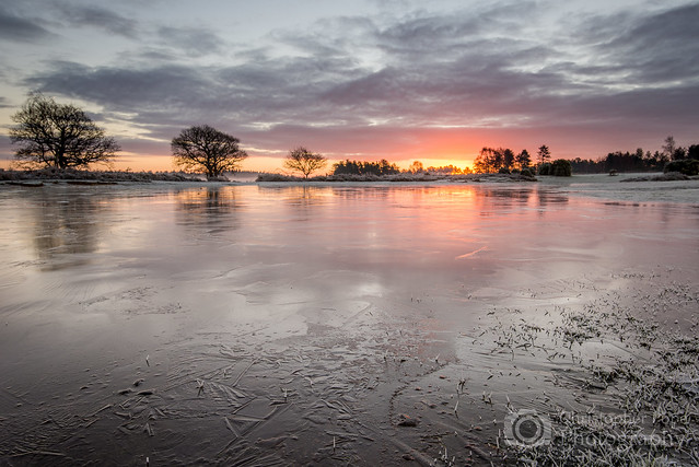Frozen Sunrise - Mogshade New forest