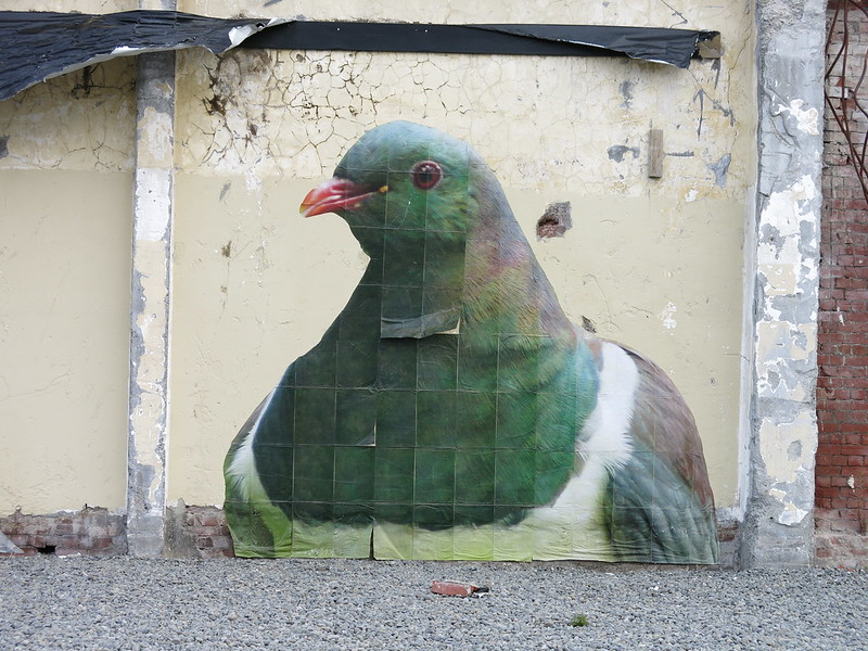 Birds on Colombo / Gloucester Street