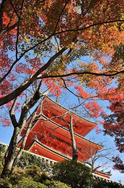 Autumn scene at Kiyomizu-dera | Kyoto (京都市), Japan
