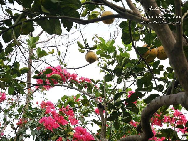 內湖採草莓圃咖啡下午茶 (19)