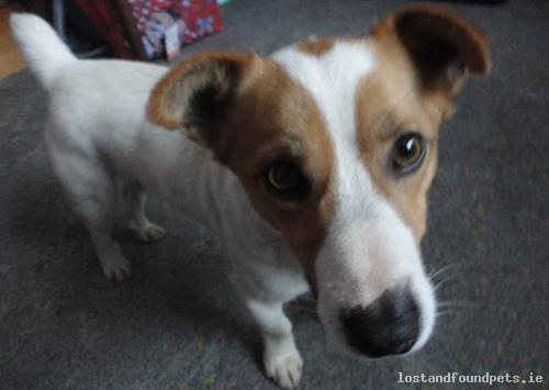 Mon, Nov 24th, 2014 Lost Male Dog - Main Street, Laois