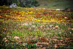Rocky Meadow