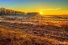 Field Frost