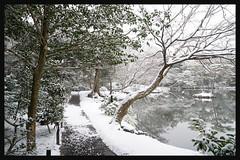日本京都-金閣寺-雪.43
