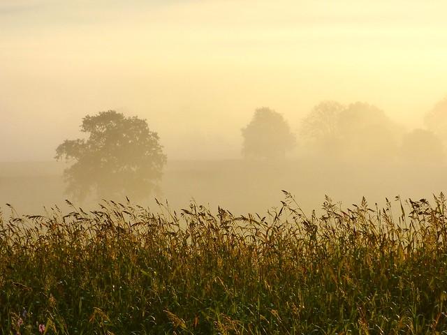 Premiers rayons du soleil - Bocage du Boischaut - Cher - Berry - Centre - France