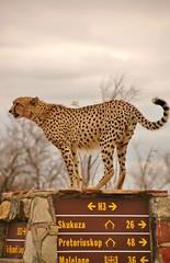 SOUTH AFRICA - Kruger National Park
