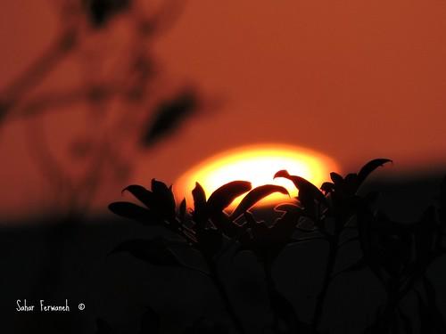 sunset sky sun nature strange nikon shine natureza ngc amman sunny jordan nikontop