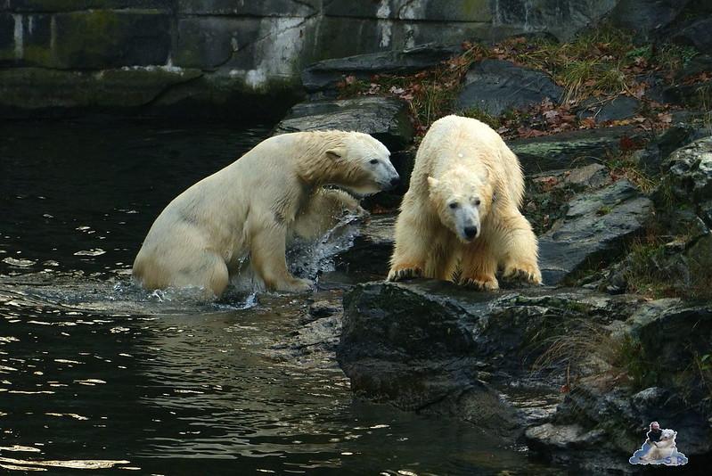 Tierpark Berlin 06.12.2014 20