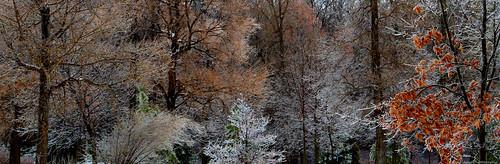trees canada quebec