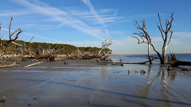 Dead trees on a stretch of Hunting Island where the ocean is reclaiming part of the island