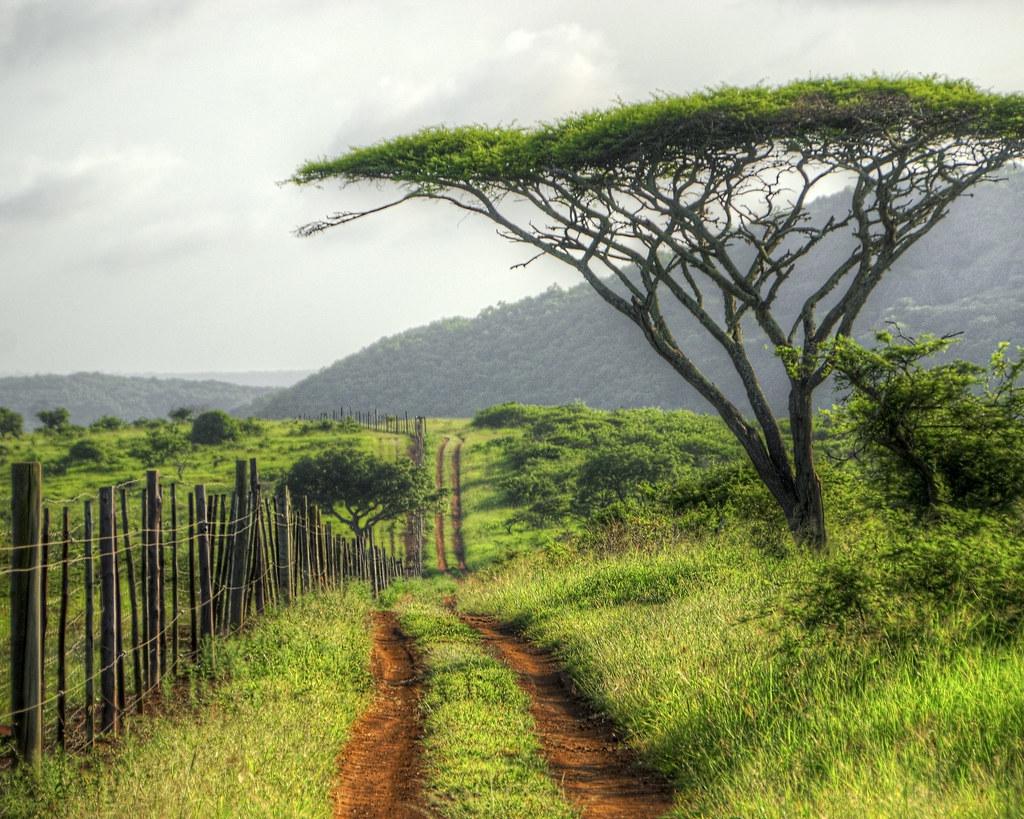 Edge of Zulu Nyala