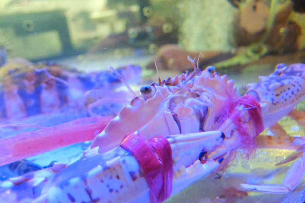 螃蟹看著你用餐啊QQ