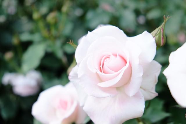 Fehér, rózsaszín, Karen.