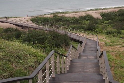 海岸之保護應兼顧自然海岸林之保育與沙丘之保護,步道之建設必須迴避沙丘之移動通路。郭瓊瑩攝