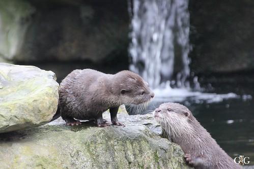 Zoo Berlin 11.01.2015 24