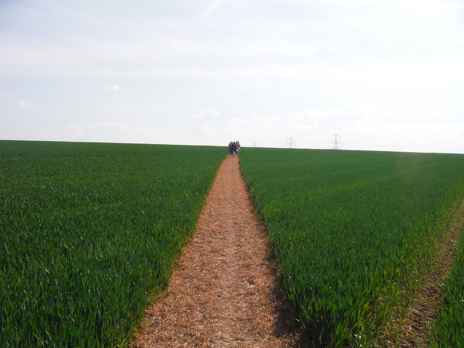 'Usually well-cleared field crossing...', Newnham SWC Walk 91 - Baldock Circular