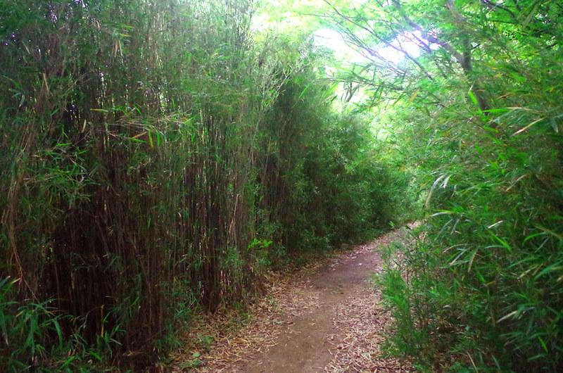 toomilog-tengoku_Hiking_trail005