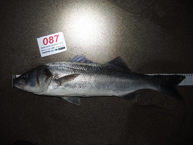 DSCN2754