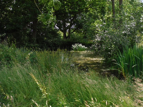 Pond in Meadow, near Frenchmoor