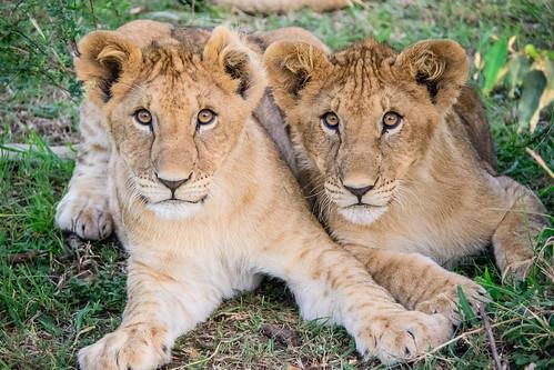 Maasai Mara Safari-3044.jpg