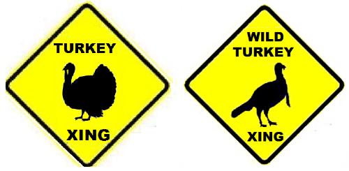 Turkeys, Wild and Otherwise