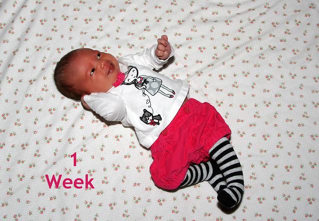 15358342334 af3795f722 z McKaylas Week 1