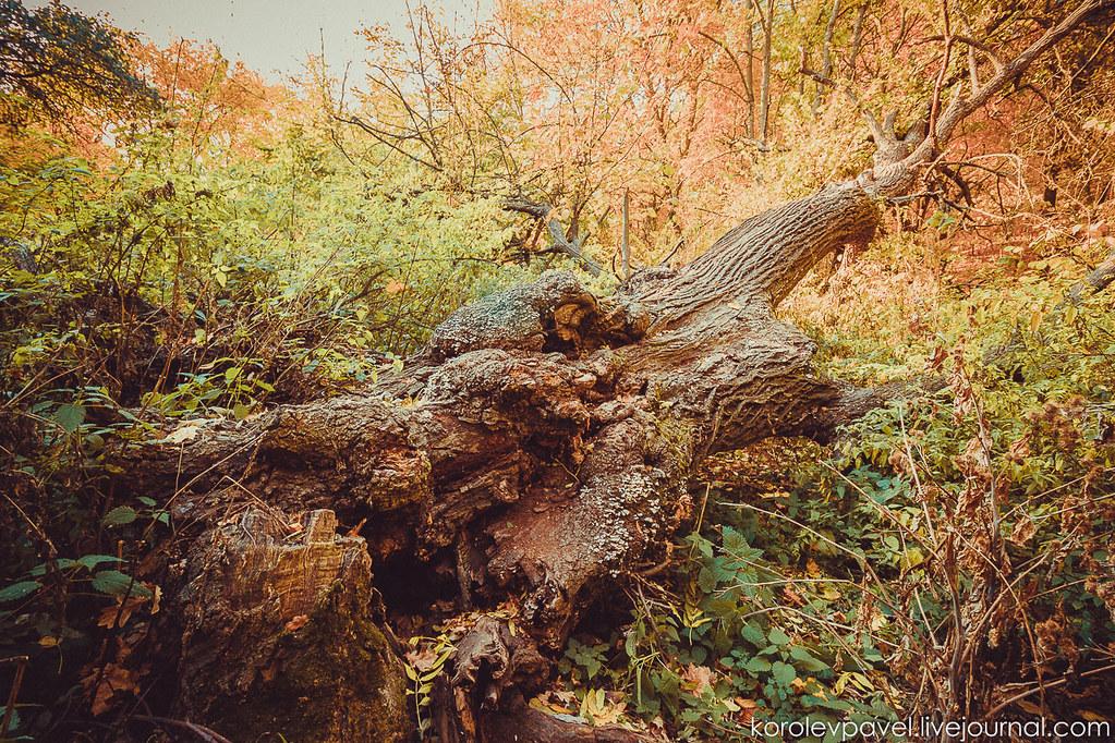 Autumn-259
