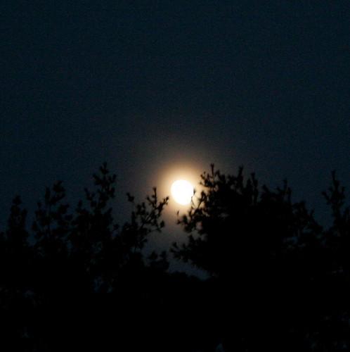283/365 Full Moon