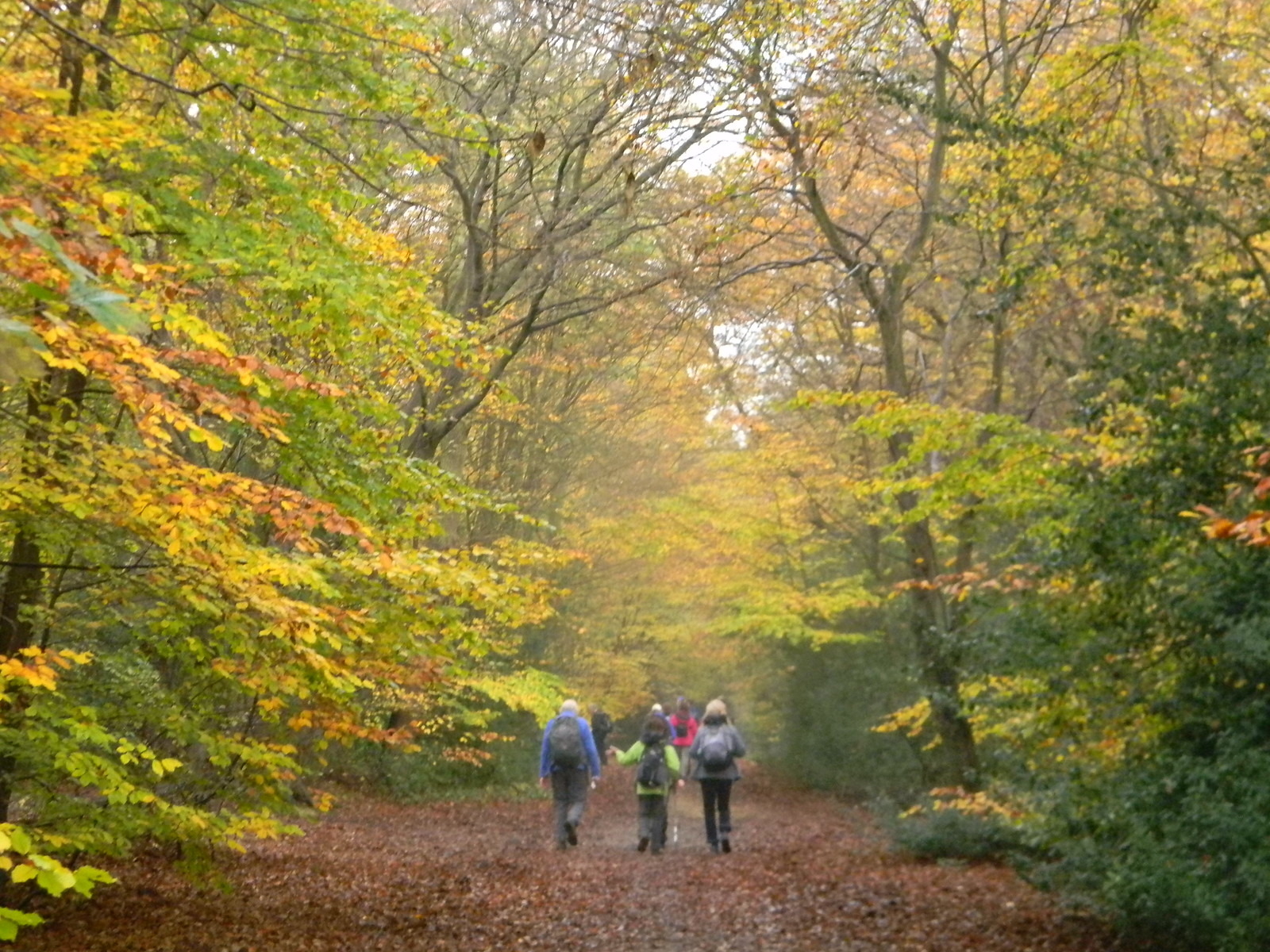 L'automne est arrive Epping Forest, Loughton to Essex