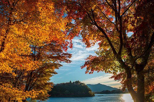 november autumn japan fuji 日本 紅葉 crazyshin yamanashi 2014 河口湖 山梨県 南都留郡 afsnikkor2470mmf28ged nikond4s 20141118ds10802