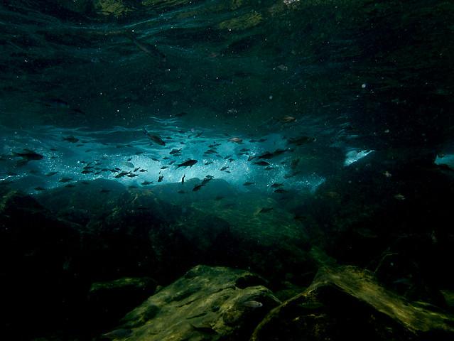 Freshwater Underwater A Gallery On Flickr