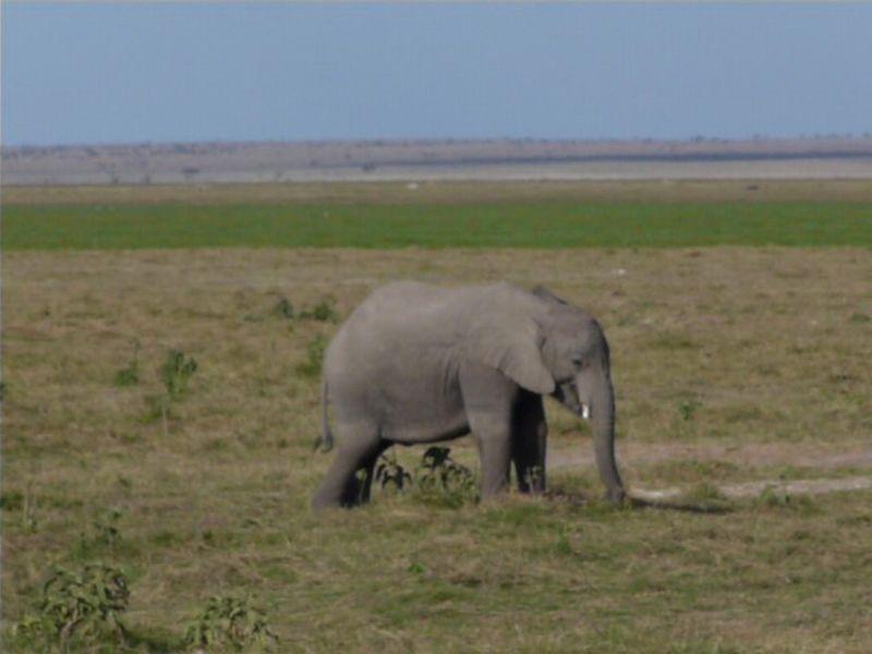 Kenia2007-0690