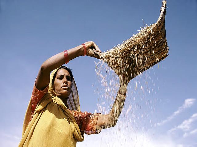 कृषि पर ग्लोबल वार्मिंग का असर