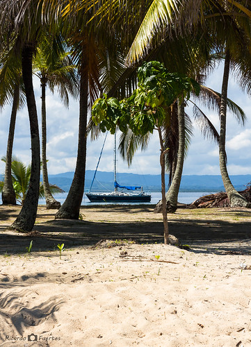 barco playa palmeras isla