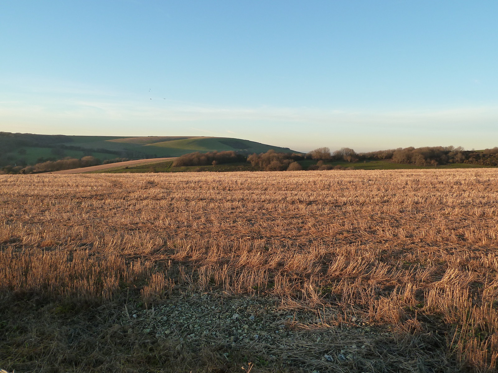 Wheatfield in Winter (Berwick to Birling Gap) In winter afternoon sun.