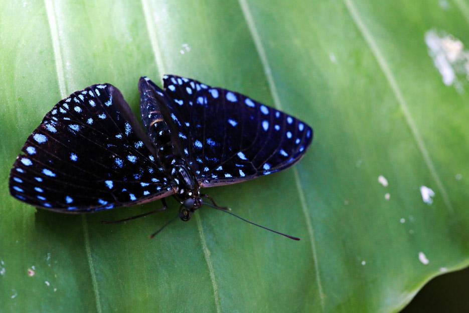 091014_01_butterfly12